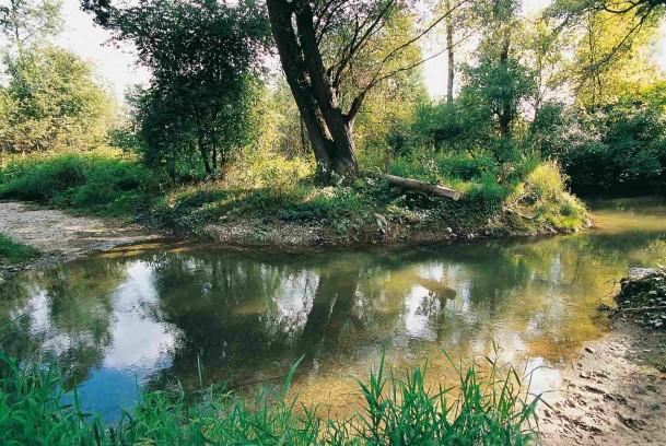 Gué dans la forêt alluviale de Rhinau (67)