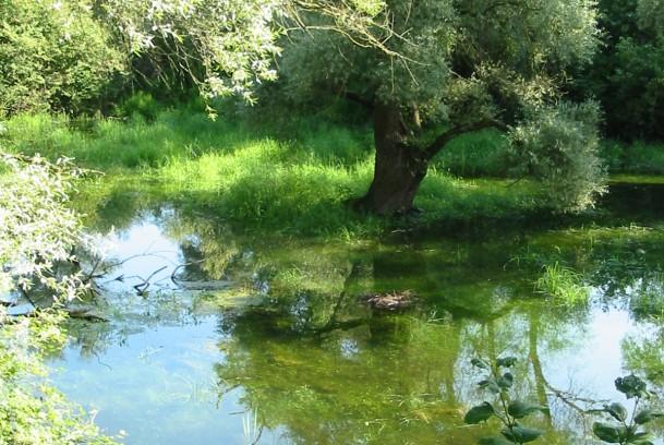 Réserve Naturelle du Delta de la Sauer