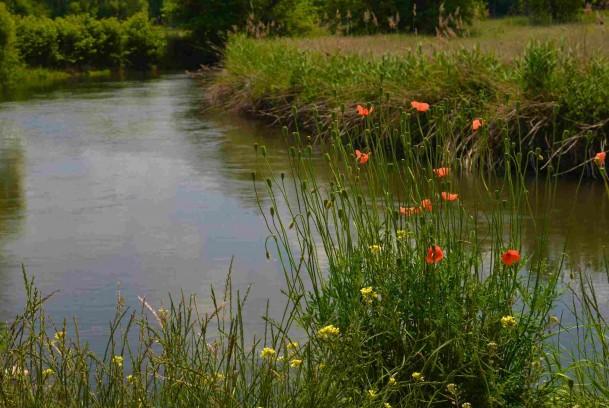 schéma de gestion de l'ill, protéger les habitations des crues et valoriser le patrimoine naturel