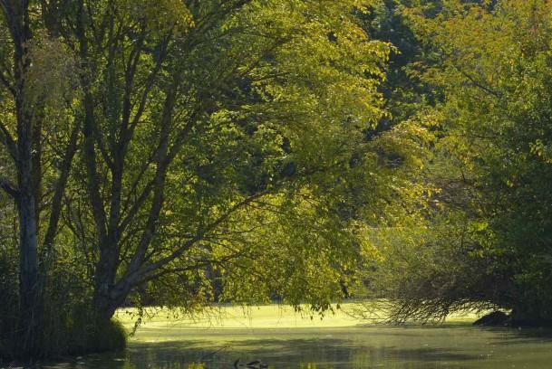 Réserve naturelle régionale de l'Eiblen à Réguisheim (68)